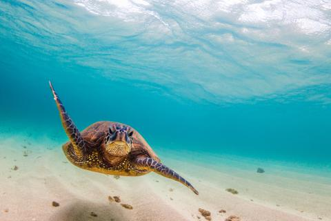 hawaii-island-destination-turtle-480x320.jpg