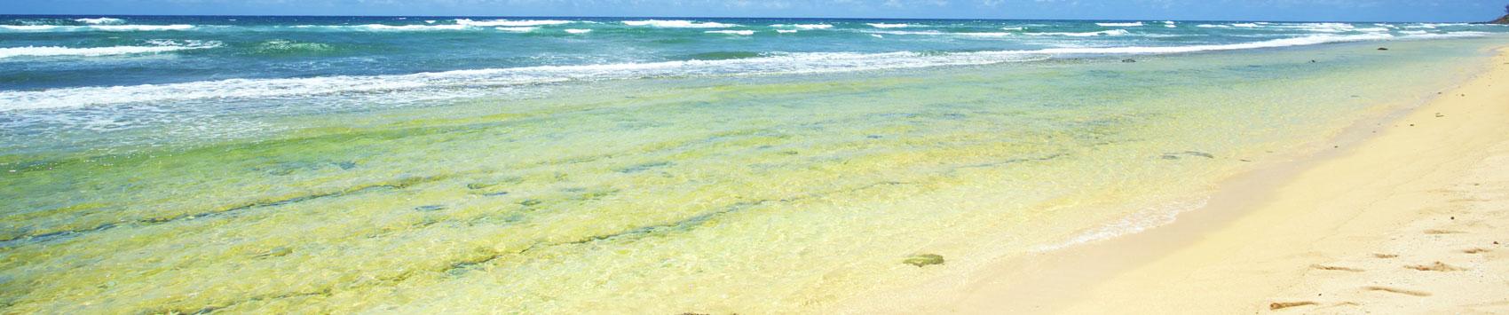 Kauai Hotels and Travel Guide | Aqua-Aston Hotels