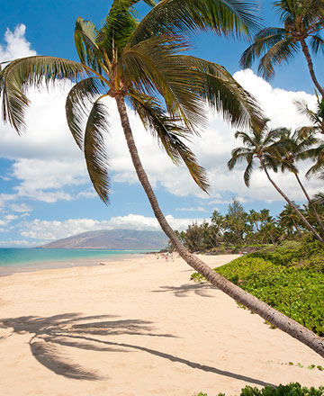 81c928b8412e Maui Hotels and Travel Guide | Aqua-Aston Hotels