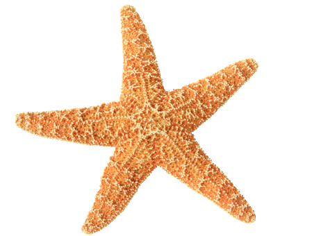 maui-destination-carousel-starfish.png