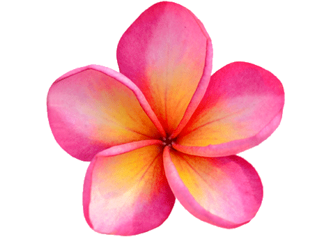 oahu-destination-carousel-flower.png