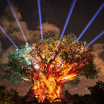 orlando-disney-tree-of-life-360X360.jpg