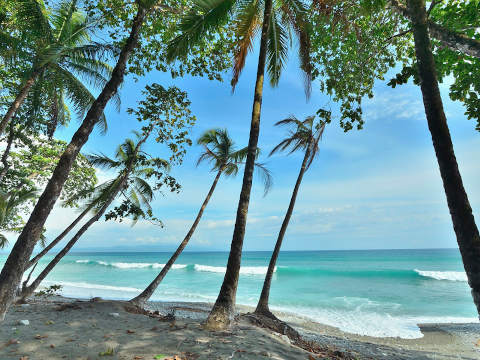 matapalo_beach-480x360.jpg