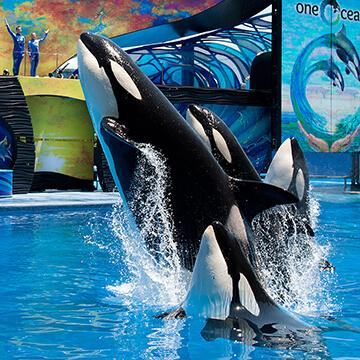 orlando-content-orcas-360X360.jpg