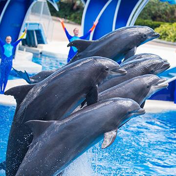 orlando-seaworld-dolphine-360X360.jpg